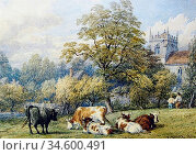 Baker of Leamington Thomas - Cattle and Figures in a Meadow by a ... Стоковое фото, фотограф Artepics / age Fotostock / Фотобанк Лори