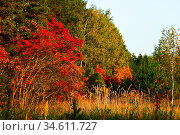 Autumn landscape. Bright colored leaves on the branches in the autumn... Стоковое фото, фотограф Zoonar.com/Dmitry Kushch / age Fotostock / Фотобанк Лори