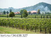 The agriculture of the Wineyard of Silver lake near the city of Pattaya... Стоковое фото, фотограф Zoonar.com/URS FLUEELER / age Fotostock / Фотобанк Лори