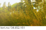 sunny summer field with herbs. Стоковое видео, видеограф Syda Productions / Фотобанк Лори