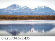 Paragliding over the lake. Редакционное фото, фотограф Вита Фортуна / Фотобанк Лори