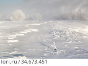 Winter fairytale trees in the snow. Редакционное фото, фотограф Вита Фортуна / Фотобанк Лори