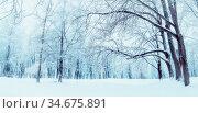 Зимний пейзаж. Зимний лес и заснеженные деревья, панорама. Winter landscape, snowy trees in the forest. Winter snowy day scene. Winter background, panorama of winter forest. Стоковое фото, фотограф Зезелина Марина / Фотобанк Лори