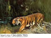 Swan Cuthbert Edmund - Prowling Tiger - British School - 19th Century. Стоковое фото, фотограф Artepics / age Fotostock / Фотобанк Лори
