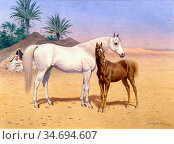 Harington Bird John Alexander - an Arab Mare and Foal - British School... Редакционное фото, фотограф Artepics / age Fotostock / Фотобанк Лори
