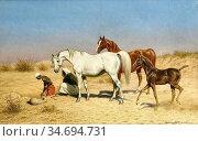 Harington Bird John Alexander - Arab Horses - British School - 19th... Редакционное фото, фотограф Artepics / age Fotostock / Фотобанк Лори