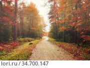 Осенний пейзаж. Осенний лес. Autumn forest landscape, soft filter. Стоковое фото, фотограф Зезелина Марина / Фотобанк Лори