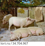 King William Gunning - Porkers Resting - British School - 19th Century... Редакционное фото, фотограф Artepics / age Fotostock / Фотобанк Лори