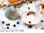 Shells, coarse grained Sea Salt and peppercorns close up. Стоковое фото, фотограф Zoonar.com/Valery Voennyy / easy Fotostock / Фотобанк Лори