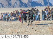 Mongolian horse game called 'kukbar', picking up object from the ground at full gallop. Mongolia. October 2011. Стоковое фото, фотограф Jeff Foott / Nature Picture Library / Фотобанк Лори