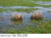 Wiesenueberflutung nach dem Regen - formatfuellend aufgenommen. Стоковое фото, фотограф Zoonar.com/Zoonar/J. Ehrlich / easy Fotostock / Фотобанк Лори