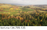 Scenic aerial view of autumn hilly landscape with colored trees. Стоковое видео, видеограф Яков Филимонов / Фотобанк Лори