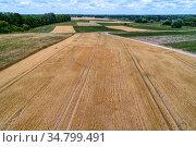 Wheat field aerial view. Rural landscape middle Russia. Стоковое фото, фотограф Андрей Радченко / Фотобанк Лори