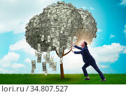 Businessman with money tree in business concept. Стоковое фото, фотограф Zoonar.com/Elnur Amikishiyev / easy Fotostock / Фотобанк Лори