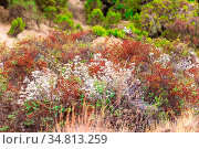 Colors of plants in Simien Mountains National Park in Northern Ethiopia... Стоковое фото, фотограф Zoonar.com/Artush Foto / easy Fotostock / Фотобанк Лори