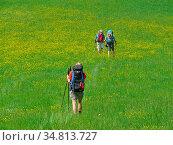 Wanderer, wandern, wandergruppe, wiese, weide, rucksack, rucksäcke... Стоковое фото, фотограф Zoonar.com/Volker Rauch / easy Fotostock / Фотобанк Лори
