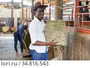 Two workers spreading hay at stable. Стоковое фото, фотограф Яков Филимонов / Фотобанк Лори