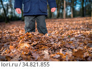 Boy standing deep in the fallen leaves in autumn in a forest. Стоковое фото, фотограф Zoonar.com/Pawel Opaska / easy Fotostock / Фотобанк Лори