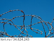 Coiled twisted sharp barbed wire against a bight blue sky. Стоковое фото, фотограф Zoonar.com/PHILIP_OPENSHAW / easy Fotostock / Фотобанк Лори