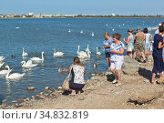 Туристы кормят лебедей на озере Сасык-Сиваш в городе Евпатория, Крым. Редакционное фото, фотограф Николай Мухорин / Фотобанк Лори