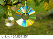 Shiny CD disc suspended from a tree branch in the sunlight. Стоковое фото, фотограф Валерий Смирнов / Фотобанк Лори
