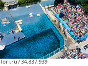 Aerial shot of the pool where the California sea lions (Zalophus californianus... Стоковое фото, фотограф Eric Baccega / Nature Picture Library / Фотобанк Лори