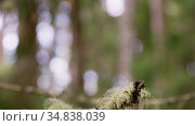 close up of moss growing on branches in forest. Стоковое видео, видеограф Syda Productions / Фотобанк Лори