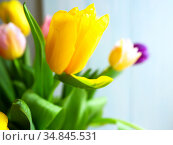 spring fresh bouquet of colorful beautiful yellow and pink tulips. Стоковое фото, фотограф Анна Гучек / Фотобанк Лори