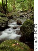 Stream at serian town, kuching, sarawak, malaysia, borneo. Стоковое фото, фотограф Chew Chun Hian / age Fotostock / Фотобанк Лори