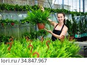 Young female gardener in apron working with fern in pots. Стоковое фото, фотограф Яков Филимонов / Фотобанк Лори