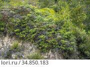 Wild plants at Telok Melano, Sematan, Sarawak, East Malaysia. Стоковое фото, фотограф Chua Wee Boo / age Fotostock / Фотобанк Лори