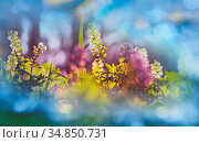 Beautiful spring flowers in the forest. Seasonal Natural background. Стоковое фото, фотограф Zoonar.com/Galyna Andrushko / easy Fotostock / Фотобанк Лори