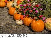 Squash for decoration in a street in Germany. Стоковое фото, фотограф Hans-Joachim Schneider / easy Fotostock / Фотобанк Лори