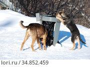 Стая бездомных собак на Воробьевых горах. Район Раменки. Город Москва (2011 год). Стоковое фото, фотограф lana1501 / Фотобанк Лори