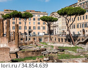 View of the Torre Argentina square with Italian Stone Pine trees and archaeological sites in Rome (2017 год). Стоковое фото, фотограф Сергей Фролов / Фотобанк Лори