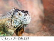 Close-up portrait of a reptile with protective coloring, disguise. Стоковое фото, фотограф Анна Гучек / Фотобанк Лори