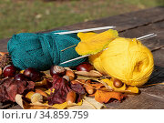 Autumn scene: two skeins of knitting thread and knitting needles against a background of bright yellow leaves, chestnuts and acorns on a wooden table. Стоковое фото, фотограф ok_fotoday / Фотобанк Лори