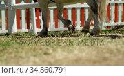 Horse in the ranch 4k. Стоковое видео, агентство Wavebreak Media / Фотобанк Лори