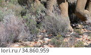 Wild elephants grazing on grassland 4k. Стоковое видео, агентство Wavebreak Media / Фотобанк Лори