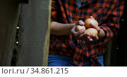 Woman holding brown eggs in the pen 4k. Стоковое видео, агентство Wavebreak Media / Фотобанк Лори