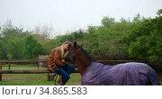 Woman hugging horse on wooden fence 4k. Стоковое видео, агентство Wavebreak Media / Фотобанк Лори