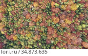 Aerial view of autumn forest. Colorful trees aerial view. Стоковое видео, видеограф Яков Филимонов / Фотобанк Лори