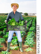 Successful horticulturist with savoy cabbage on farm plantation. Стоковое фото, фотограф Яков Филимонов / Фотобанк Лори