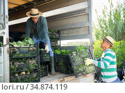 Men loading harvested bok choy in truck. Стоковое фото, фотограф Яков Филимонов / Фотобанк Лори
