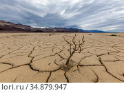Cracked mud patterns across the valley floor. This mud came from a mudslide and boulders and vegetation were locked into place by the river of mud. Bandwater... Стоковое фото, фотограф Jack Dykinga / Nature Picture Library / Фотобанк Лори