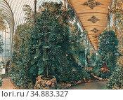 Alt Rudolf Von - Innenansicht Des Palmenhauses Von Schloss Eisgrub... Редакционное фото, фотограф Artepics / age Fotostock / Фотобанк Лори