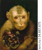 Max Gabriel Cornelis Ritter Von - Affenbaby Mit Vergissmeinnicht-... Редакционное фото, фотограф Artepics / age Fotostock / Фотобанк Лори