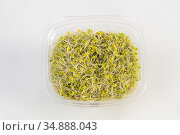 Potomac Sprout Company Organic Broccoli Sprouts. Стоковое фото, фотограф Edwin Remsberg / age Fotostock / Фотобанк Лори