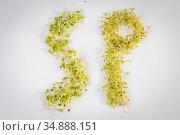 Potomac Sprout Company Organic Sprouts. Стоковое фото, фотограф Edwin Remsberg / age Fotostock / Фотобанк Лори