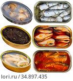 Set of assorted raw fish and seafoods. Стоковое фото, фотограф Яков Филимонов / Фотобанк Лори